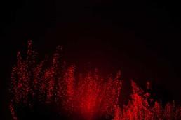 Festival Forte red tree