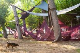 dog festival forte
